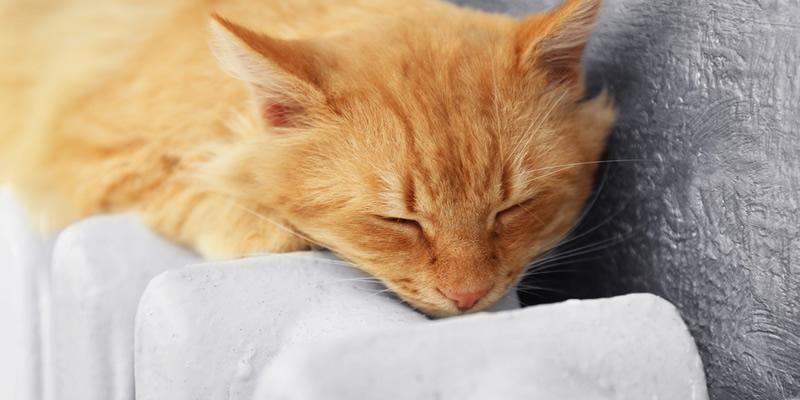 gato-sobre-radiador-de-calefacción