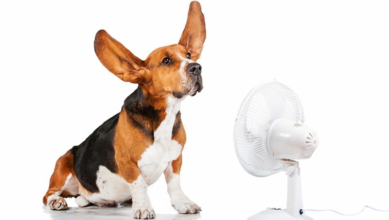 ventilador y perro